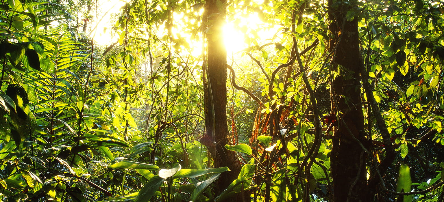 Sun Trees Rainforest Cool Earth
