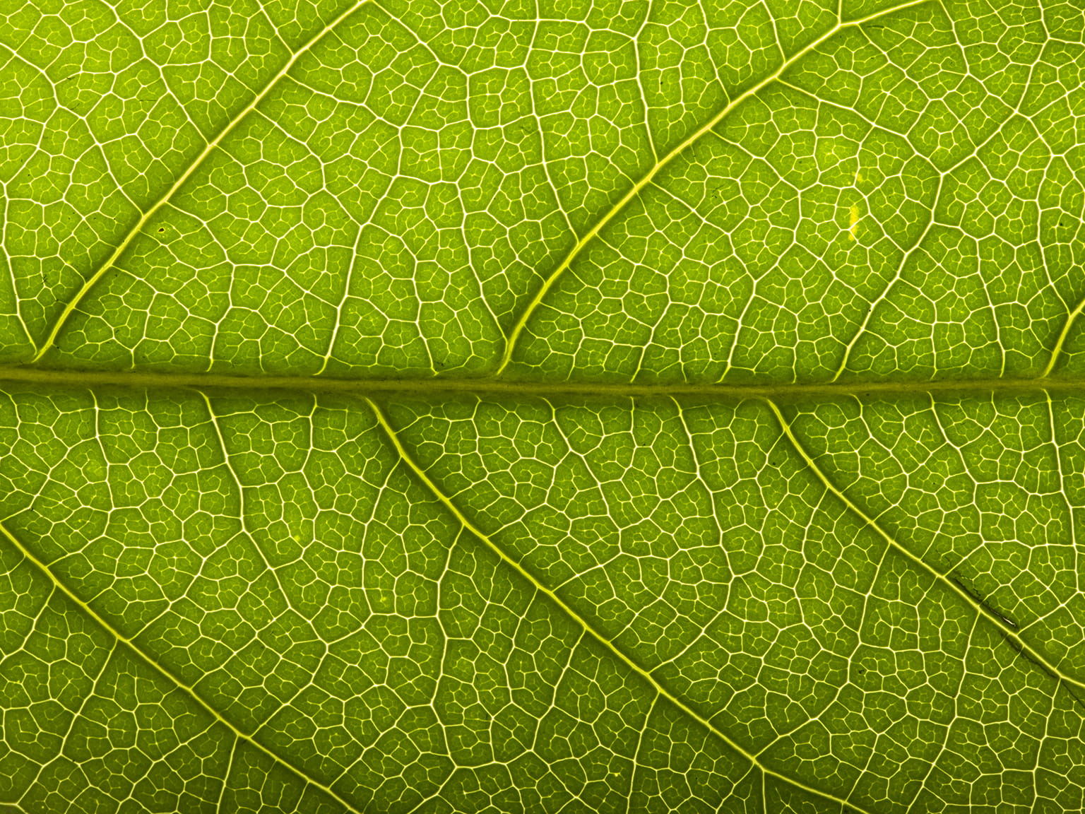 Green Leaf Detail Environmental