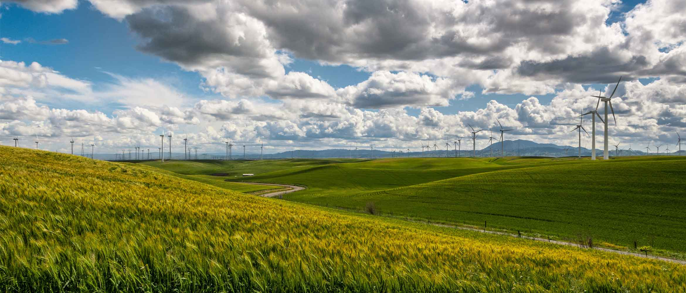 Green fields with wind turbines in the background