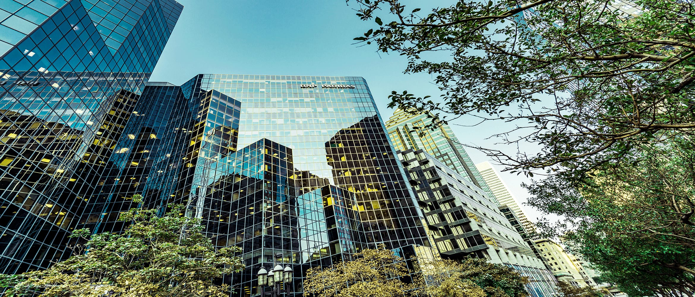 Glass windows of a skyscraper showing reflections of other buildings, viewed through trees from the ground