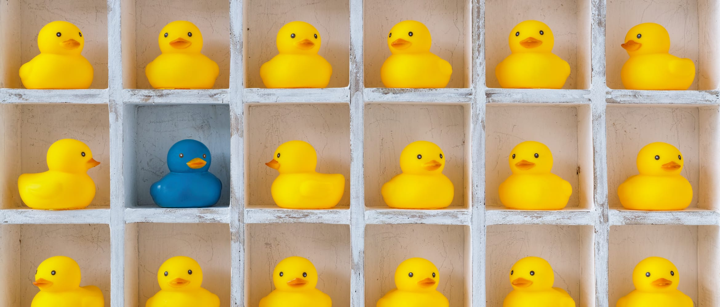 a shelf with multiple sections containing many yellow rubber ducks, and one blue rubber duck