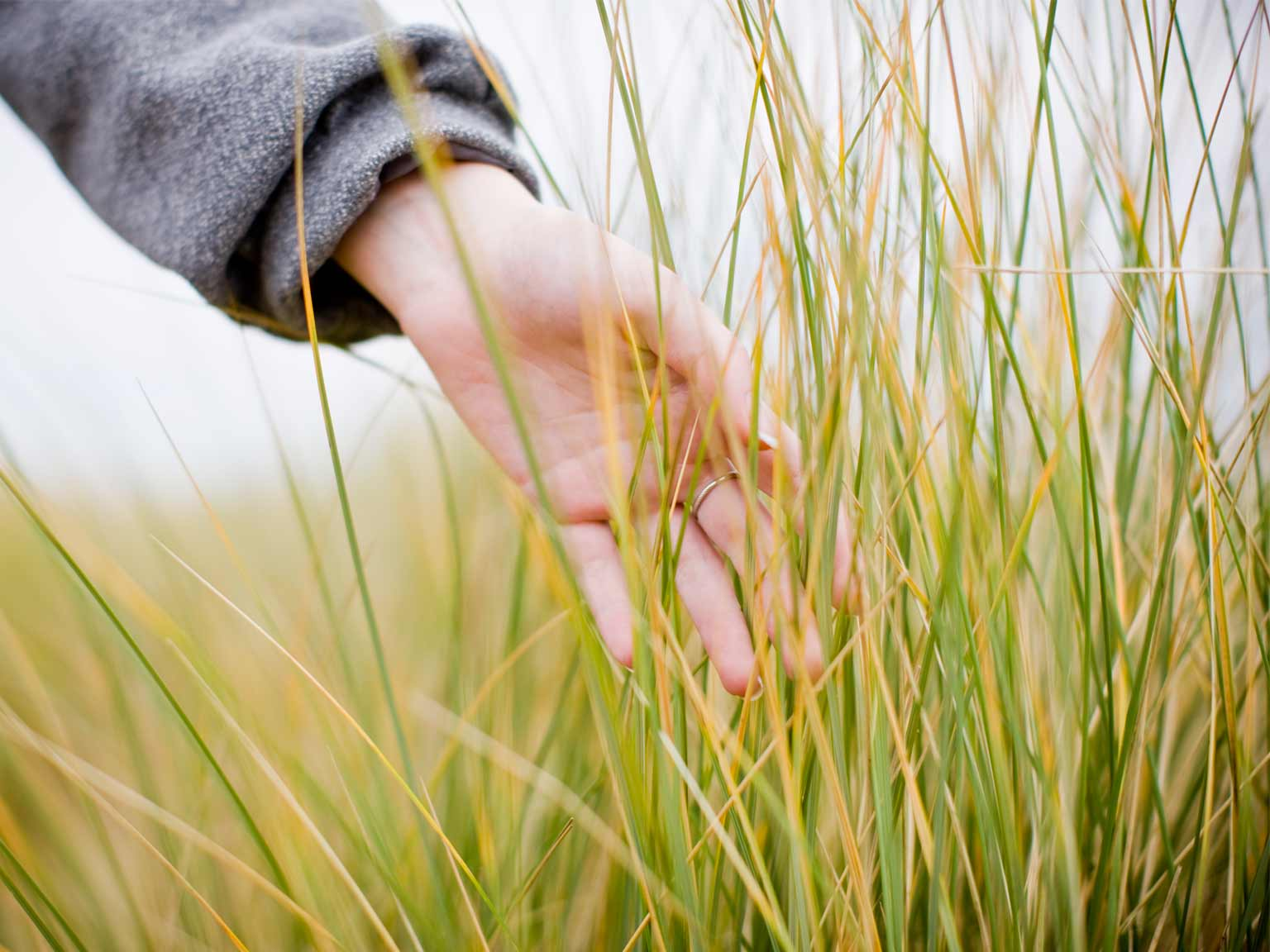 Lady's hand running through grass